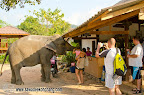 Feeding the elephant after the trek