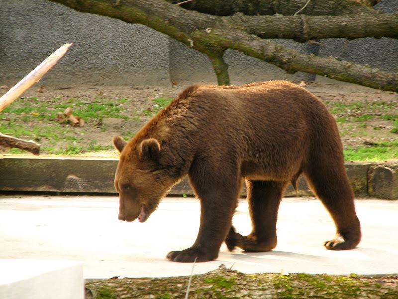 Warszawskie zoo - img_6427.jpg
