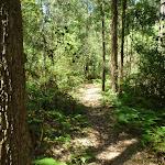 Pleasent walking north of Mooney Mooney Creek crossing (372766)