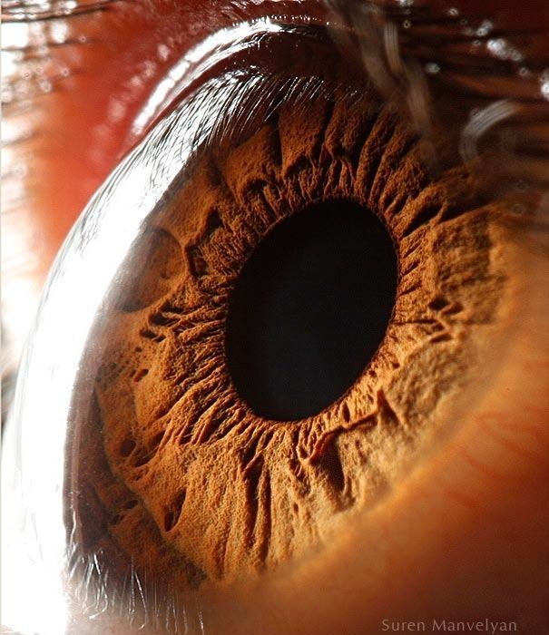 human eyes 1 (5)