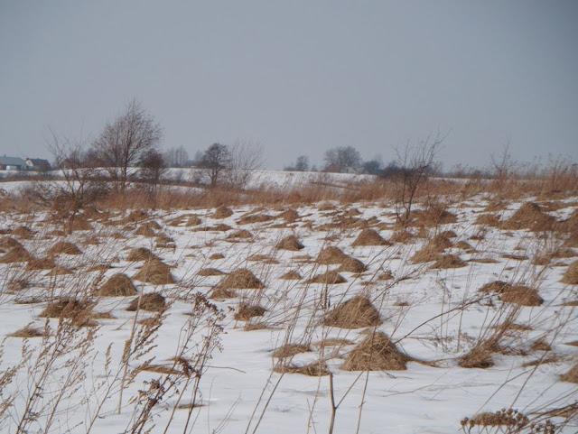 Zajecia terenowe Kolo Ekologow - DSCF9055_1.JPG
