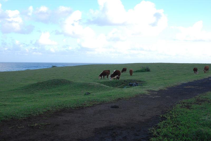 hawaii - 18.jpg