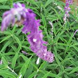 Gardening 2014 - 116_2618.JPG