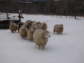 Warren's flock.
