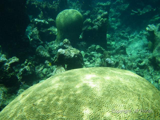 Buck Island Reef - IMGP1290.JPG