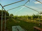 Im Weingarten I