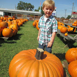 Pumpkin Patch 2015 - 12079930_10153209195452404_6425274665790612035_o.jpg
