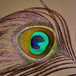 DSC_0417_processed.jpg