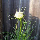 Gardening 2010, Part Two - 101_2895.JPG
