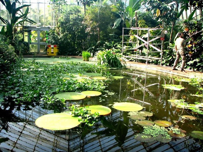 IMG_2614 - royal botanic garden