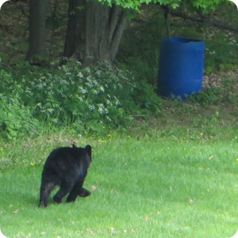 Mountainville Bear