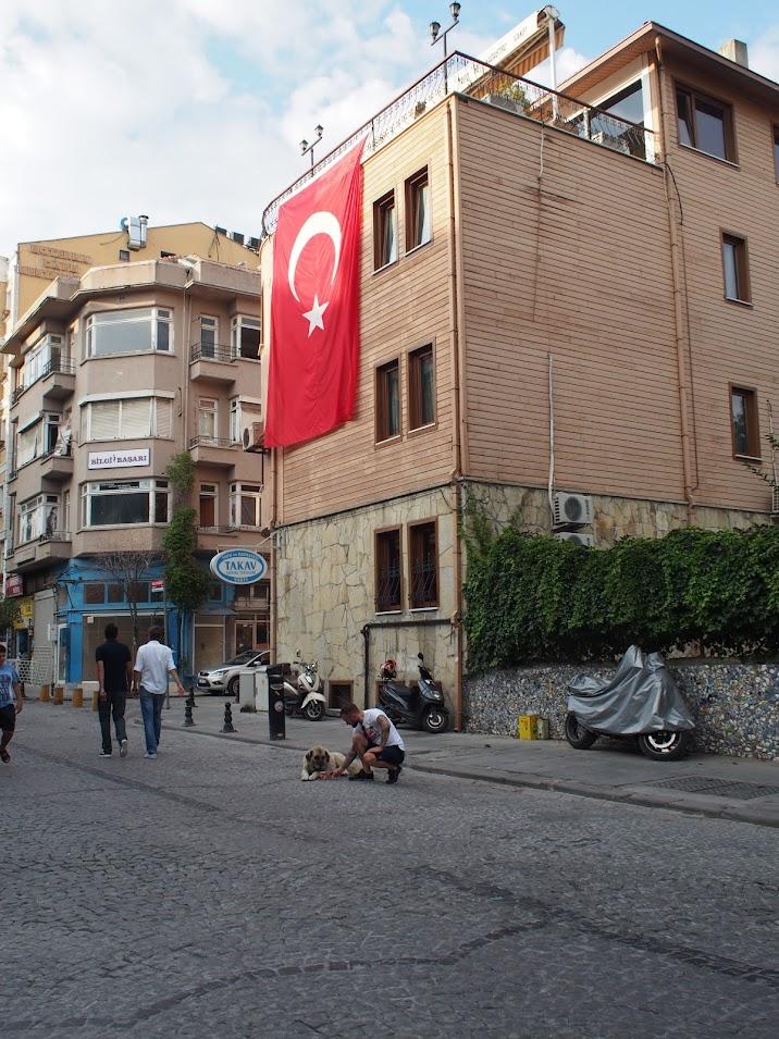 stray dog istanbul