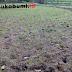 Areal Pertanian di Cicurug Terancam Kekeringan, Petani Alih Profesi