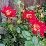 Gardening 2012 - 115_1361.JPG