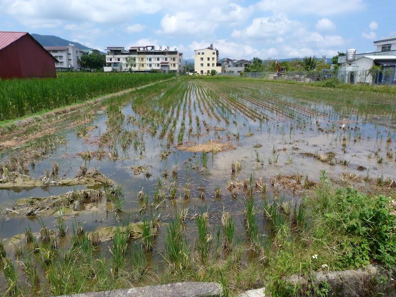 Puli ,divers ,vers Wushe,Lushan hot spring J 21 - P1190889.JPG