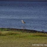 04-06-12 Myaka River State Park - IMGP4446.JPG