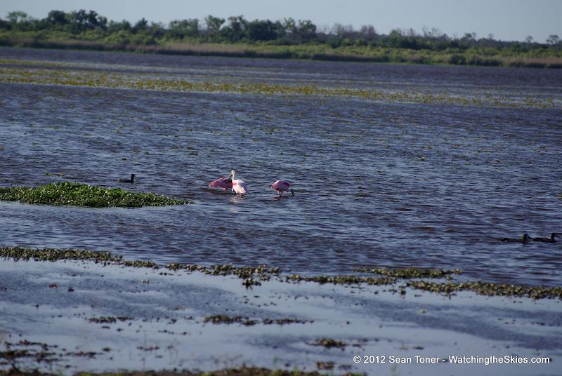 04-06-12 Myaka River State Park - IMGP4466.JPG