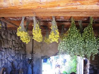 assecatge de plantes