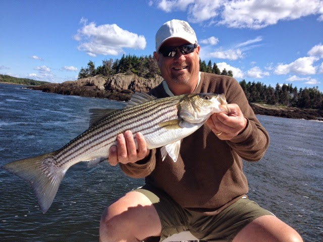 Maine Striper Fishing Charters & Reports Hotline 207-691