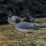 galapagos - Galapagos_FB_2-81.jpg