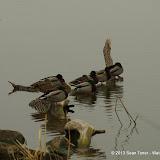 01-26-13 White Rock Lake - IMGP4316.JPG