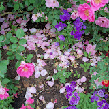 Gardening 2011 - 100_7314.JPG