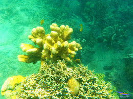 pulau harapan, 23-24 mei 2015 olympus 10
