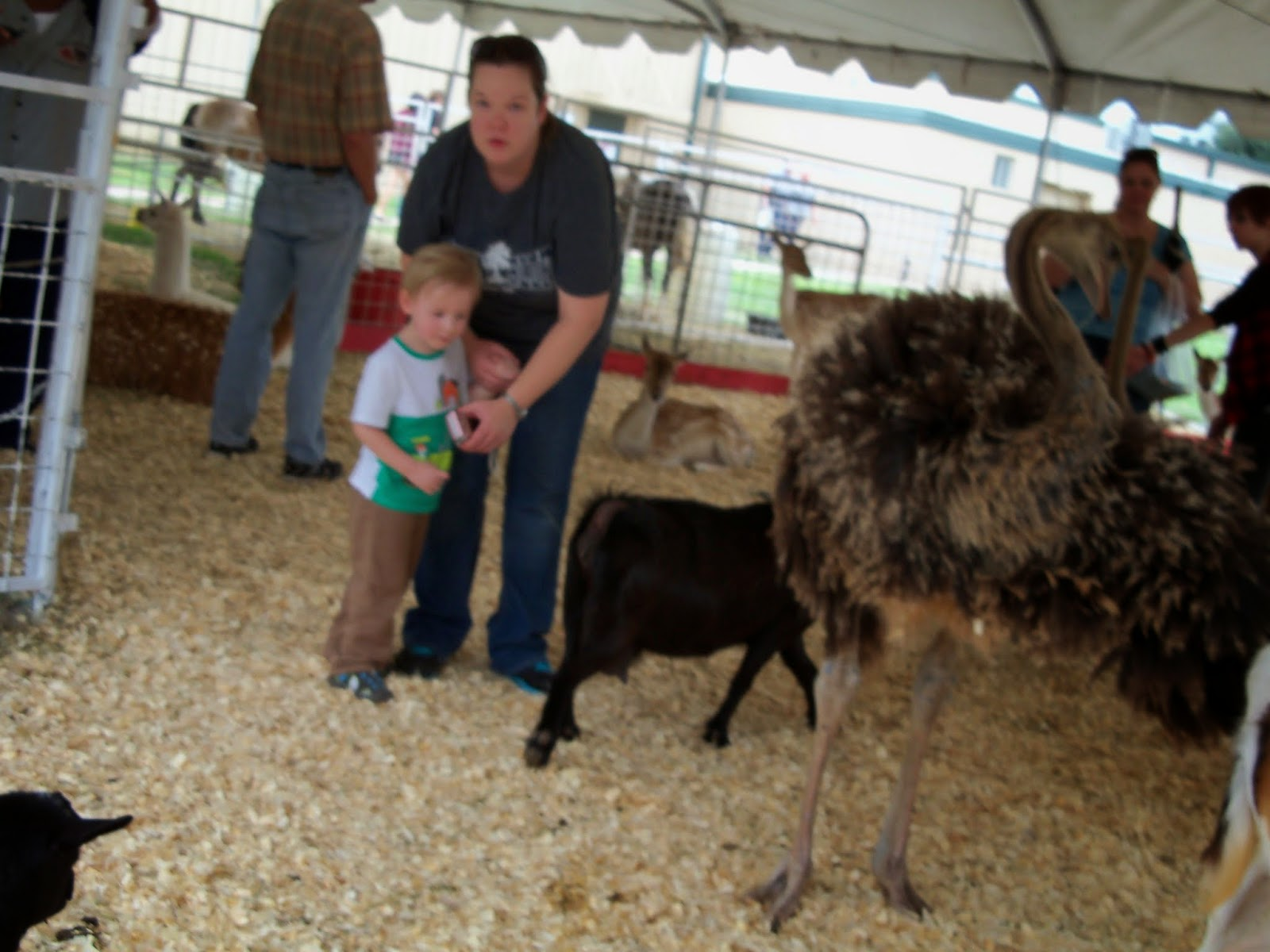 Fort Bend County Fair 2014 - 116_4315.JPG