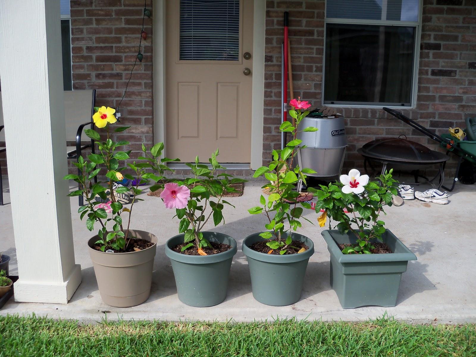 Gardening 2010, Part Three - 101_4957.JPG