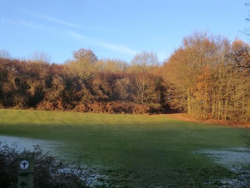 CIMG7587 Late autumn sunshine, Lullingstone Park