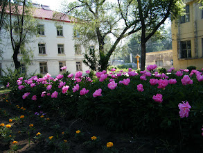 Photo: QRRS Dorms' garden in summer 2011, blossoming flowers.
