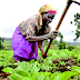 Monarch appeals to FG to make road accessible to farmers