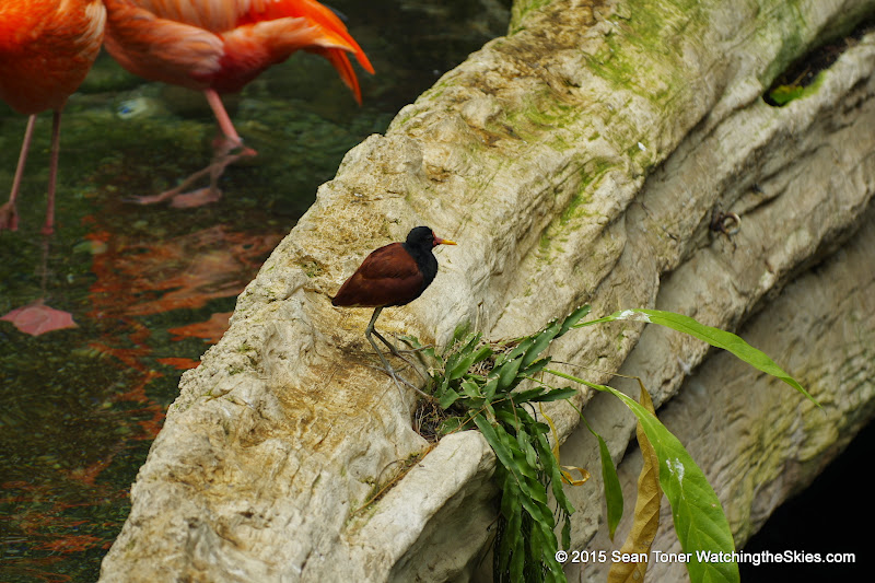 03-11-15 Dallas World Aquarium - _IMG1023.JPG