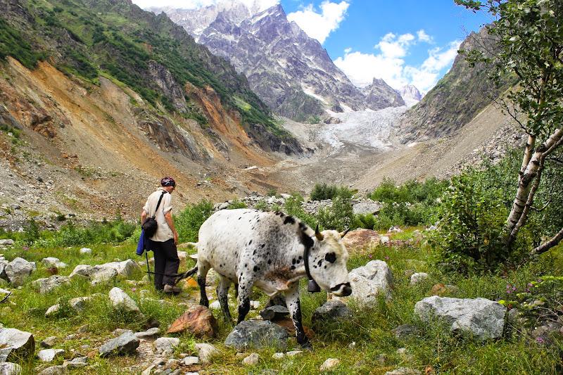 Стас гоняет коров у подножья Чалаада