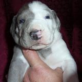 "Lindy's ""Phoebe"" @ 3 weeks"