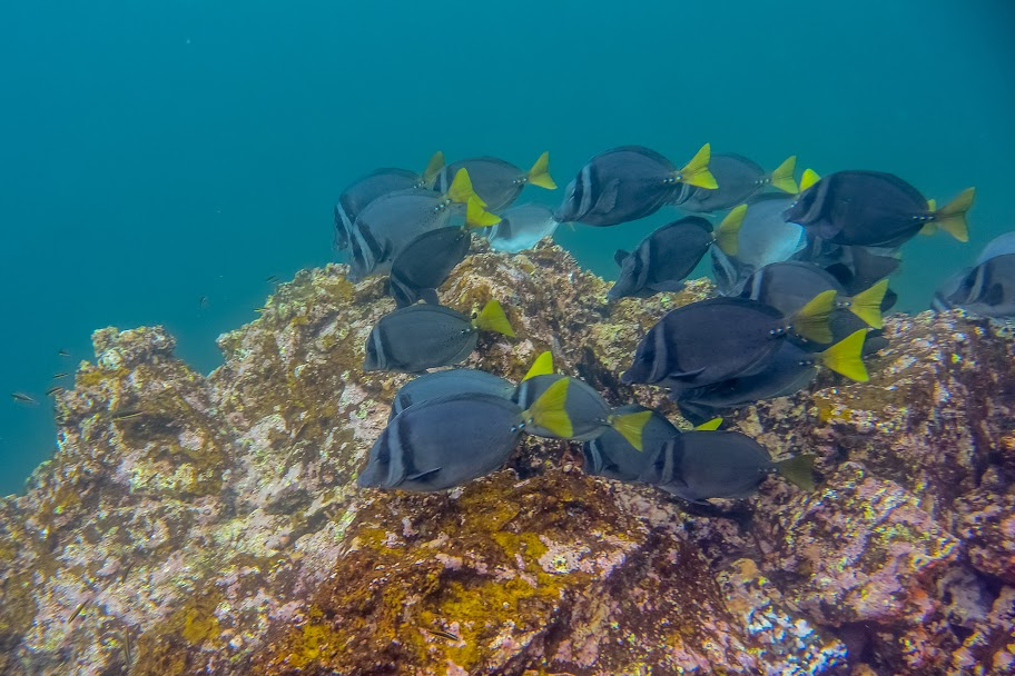 galapagos - Galapagos_FB_2-53.jpg