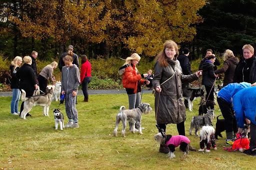 Dog Show Reykjavík 2012