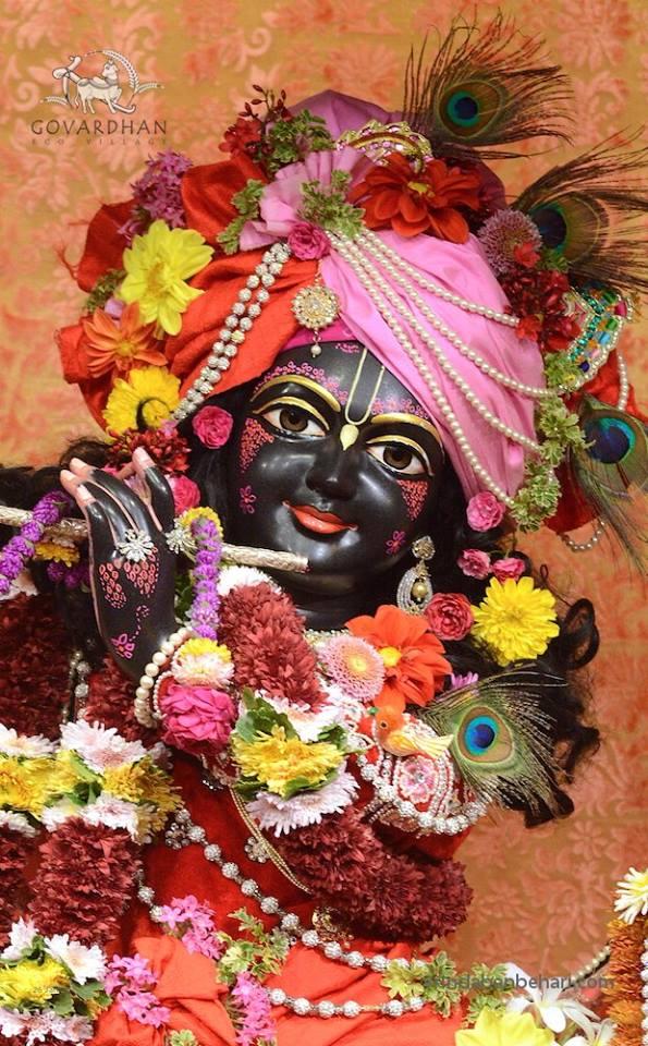 ISKCON GEV (Wada) Deity Darshan 26 Jan 2016  (1)