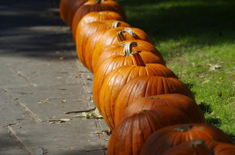 10-26-14 Dallas Arboretum - _IGP4294.JPG