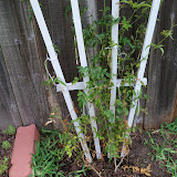 Gardening 2010 - 101_1624.JPG
