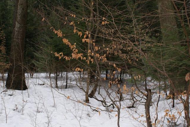 Zajęcia terenowe 29 lutego 2012 - DSC06194_1.JPG