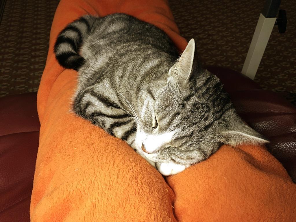 [08+Sleepy+Ruby+on+my+Legs+9-10-18%5B5%5D]