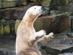 Photo: Knut ist gespannt ;-)