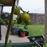 Gardening 2011 - 100_7389.JPG