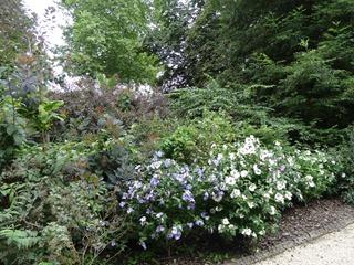 2016.08.05-003 plantes acidophiles