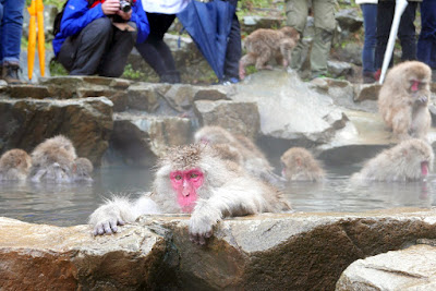 Zenning out while enjoying the hot water in contrast to the cold air (it snowed for a bit while we were there, though it didn't stick) at Jigokudani Snow Monkey Park