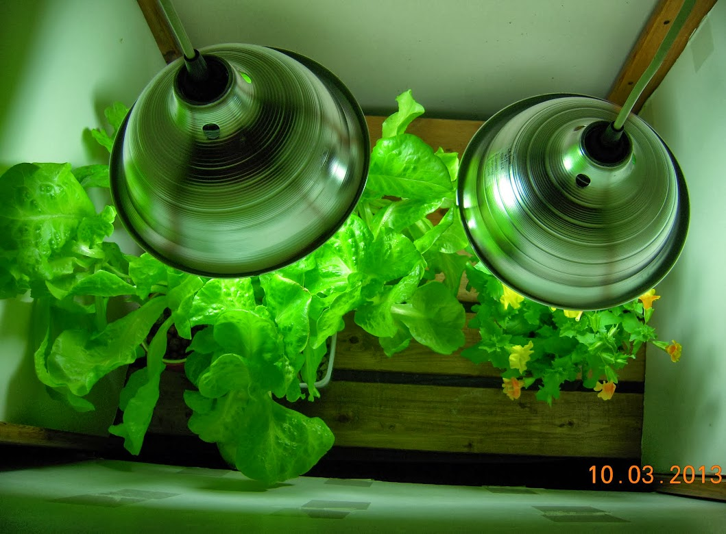 Is growing vegetables indoors cost effective aerogardenmastery - Growing vegetables indoors practical tips ...
