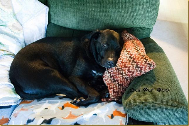 Booga Napping