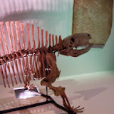 Houston Museum of Natural Science - 116_2697.JPG
