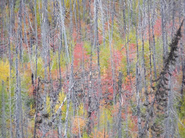 Moose Hunt in northern Quebec - Sept. 2013 - P1130242.JPG